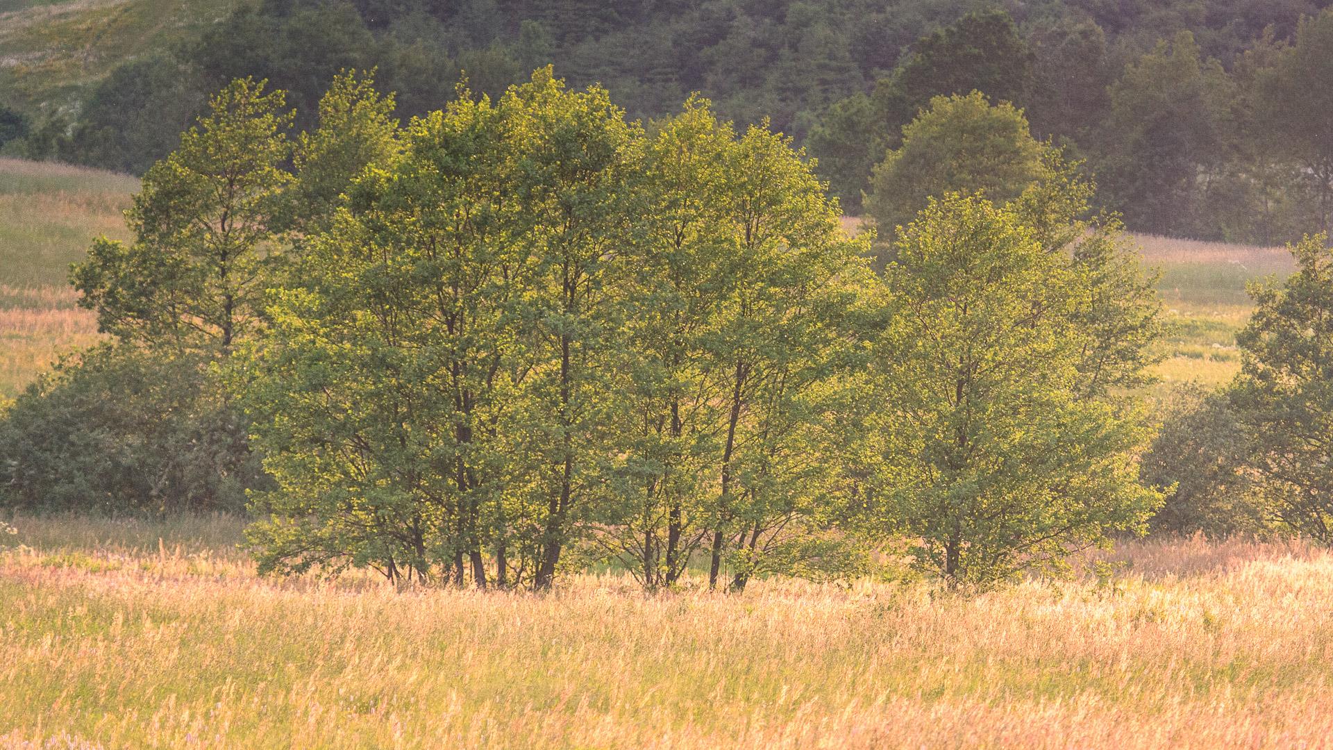 Inspiratie - Grassen in onze natuur